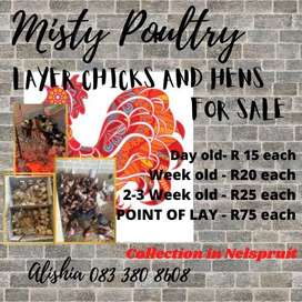 Point of lay and chicks for sale