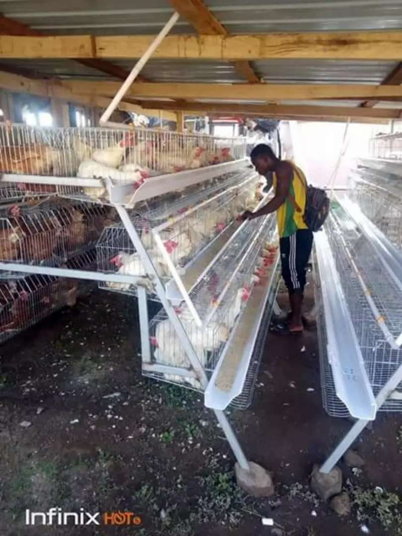 Poultry cage 0