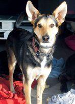 Kaj uroczy młody pies szuka domu - do adopcji