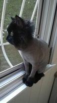 Стрижка котов. Качественно!