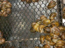 Siatka na stoły reprodukcyjne, suszniki, hodowla ślimaków SnailsPol