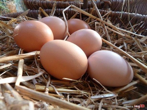 Jaja, jajka ekologiczne z wolnego wybiegu Piła - image 1