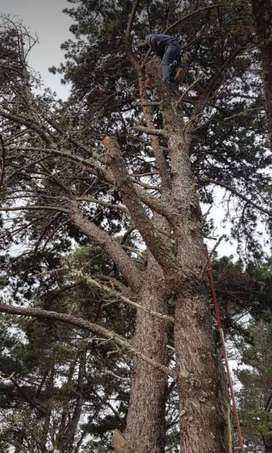 ROOTS AND ALL TREE SERVICES