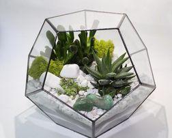 Флорариум геометрический, композиция в стеклянной вазе, суккуленты.