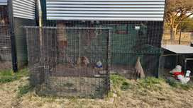 Bird cages various, large and small birds