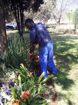 Professional Garden Boy from Malawi Available
