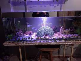 Fish tank for sale with lots of fish