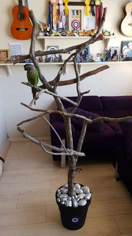 Bird perch/bird play stand