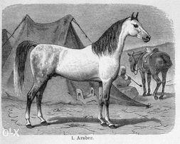 KONIE - Zwierzęta - reprinty XIX w. grafik