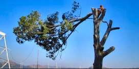 GP TREE FELLING AND RUBBLE REMOVAL SERVICE