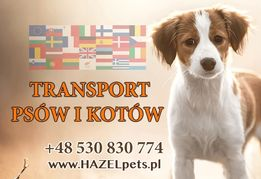 Transport psa do Anglii UK Szwecji psów kota dog cat zwierzat