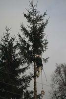 Ścinka, wycinka, pielęgnacja drzew, karczowanie, koszenie nieużytków
