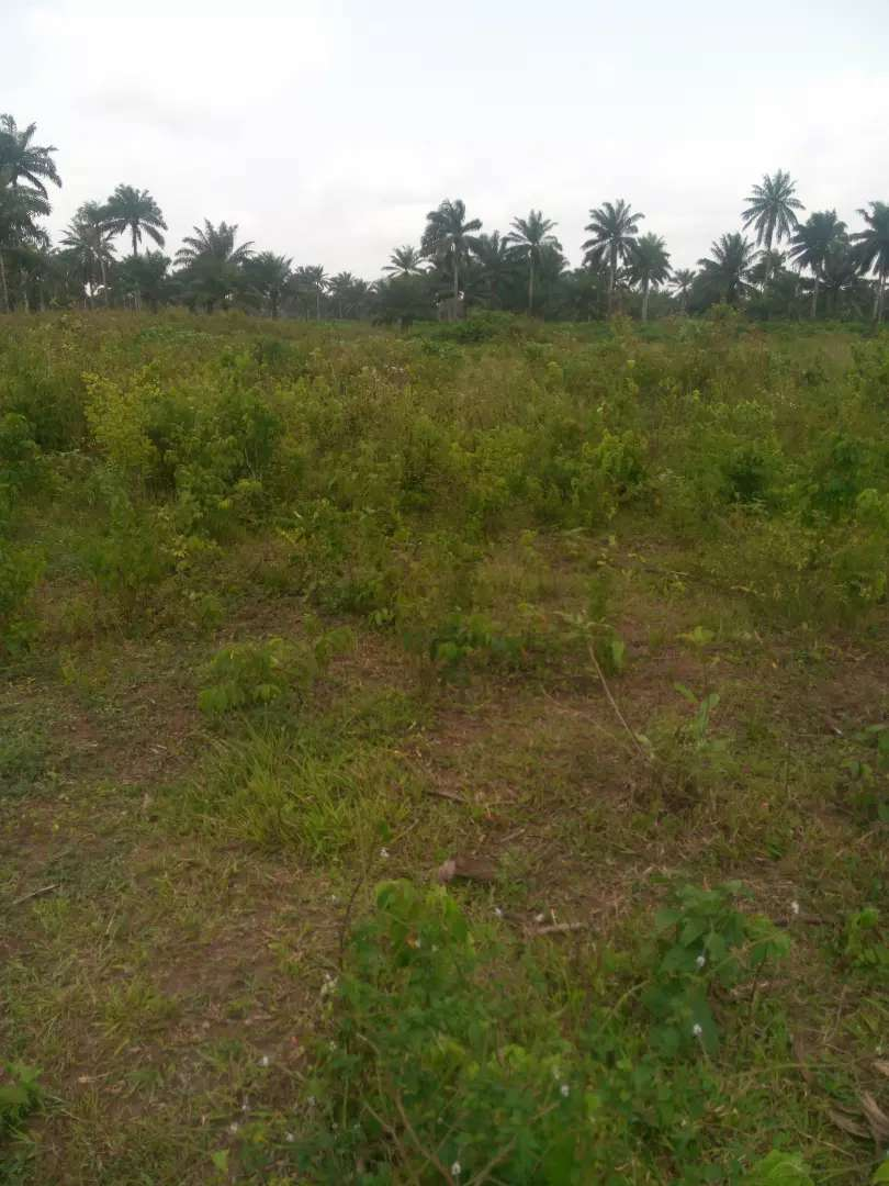 Acres of land or sale dry table surface land. 0