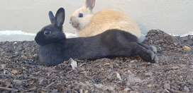 2 Miniature Rabbits and Accessories