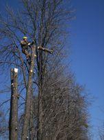 Зрiз,валка,обрiзка дерев.альпiнiсти,висотнi роботи, арборист