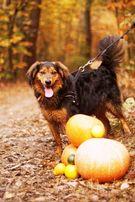 Cudowny pies szuka domu