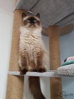 NR 12 Drapak dla kota xxl hamak legowiska miękki duży WYSYŁKA GRATIS