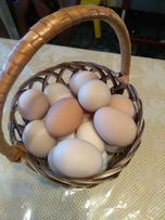 Домашние инкубационные яйца, інкубаційні яйця