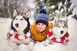 Фотосессии с хаски, аренда хаски, детские праздники, аренда собак.