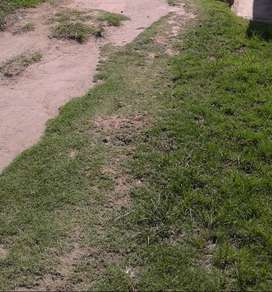 Vacant plot for sale. Port Elizabeth Fairview