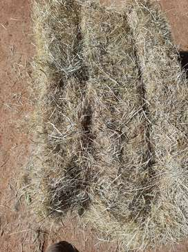 Teff for sale