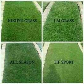 Selling grass