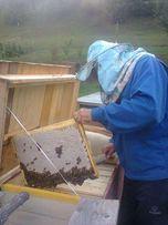 Продам Бджоло Пакети Карпатянка (Подробності в описанії)