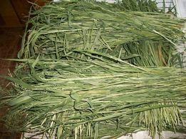 Сушенная трава зубровка.