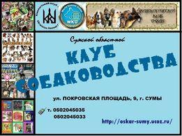Приглашаем в Сумской областной клуб собаководства