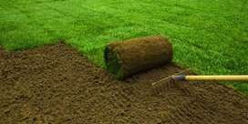 Get An Instant lawn Delivered and Installed on Your Yard on Our Amazin
