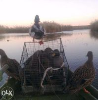 Утки подсадные кряква Семеновская черноголовая