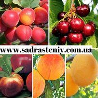 Продажа саженцев вишни, черешни, алычи, яблони, груши и многое другое