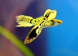акаваріумні рибки та інше