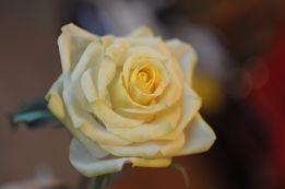 Роза как идеальный вечный подарок для девушки и женщины Ручная работа