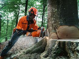 Обрізка дерев, Валка аварійних дерев, Поріз на дрова.