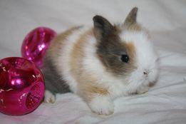 Классные новогоднии крольчата миники