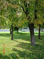 Сдам в аренду или продам участок в пригороде Днепра.