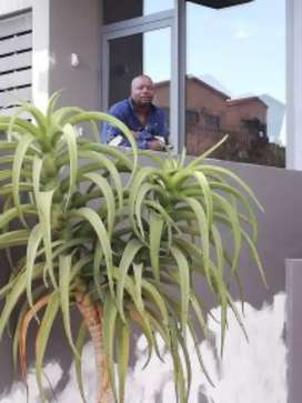 Painting, plumbing, tilling, waterproofing and swimming pools