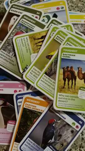 Super Animal Cards 1 Pick n Pay