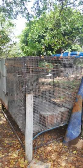 Big cage with lovebirds