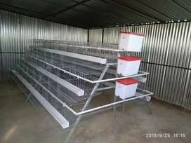 Greenhouses, layers egg system