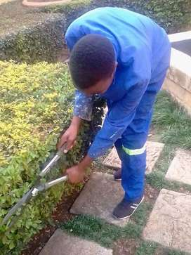 RELIABLE GARDENER (Malawian)