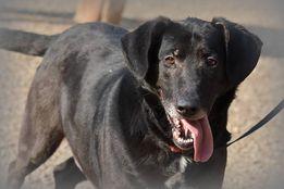 Ivo - pies który, kocha za nic. Adopcja.
