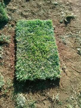Instant lawn and landscaping