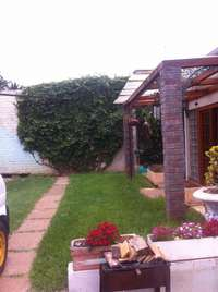 Image of Gardening, Lawn Mowing leave it to us this Christmas Season