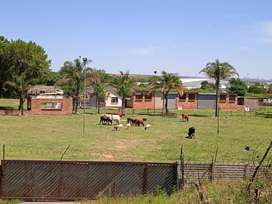 Essop's Farm. Sheep Goats and Cattle