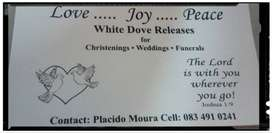 White dove release for weddings and funerals