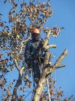СПИЛ деревьев АЛЬПИНИСТами и с ВЫШКОЙ . Днепр и область