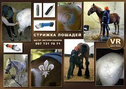 Стрижка лошадей и пони