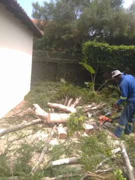 Insured tree felling and Garden services Pretoria East